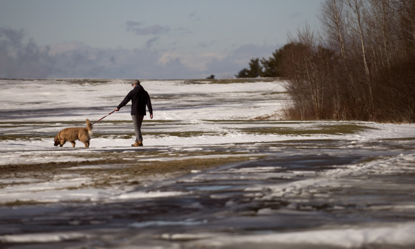 A man walks with his dog at the Bangor Municipal Golf Course on Monday. The recent roller coaster of frigid and mild weather brought temperatures in the upper 40s to the Bangor region. However, the National Weather Service predicts a snowstorm on Thursday night.