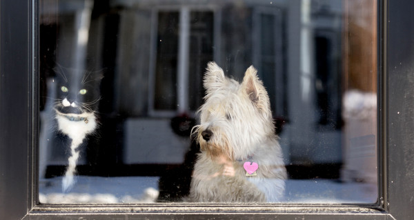 Toma (left) and Mab watch out the front door as their owner, Sally Jones, shovels snow on Friday in Bangor.