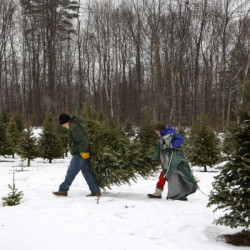John Slaughter (left) and Nancy Slaughter carry their tree back to their car after cutting it down at Fisher Christmas Tree Farm in Belfast Thursday. The Slaughters got one of the last trees of the season at the tree farm.