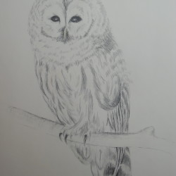"""Owl"" in pencil by Leslie Fiveland"