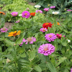 """""""Building a rain garden helps decrease stormwater runoff while also increasing campus biodiversity by creating a natural habitat for butterflies, bees, birds and other wildlife,"""" says Dr. Thomas Stone, an assistant professor of mathematics and physics at Husson University's College of Science and Humanities."""