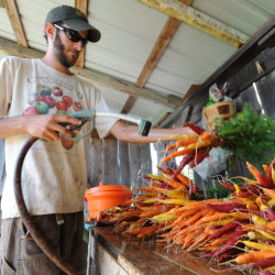 Brian St. Laurent washes carrot bunches at the Maine Organic Farmers and Gardeners Association farm in Unity, Aug. 24, 2011.