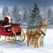 Santa & his Alpacas