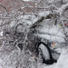 Snow laden tree crushes coach's Dodge