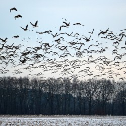 Study reveals many bird species moving north