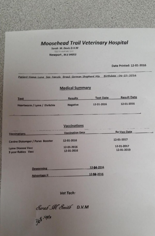 rabies vaccine certificate template - fake fax confirmation sheet