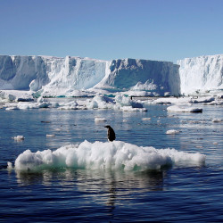 An Adelie penguin stands atop a block of melting ice near the French station at Dumont d'Urville in East Antarctica, Jan. 23, 2010.