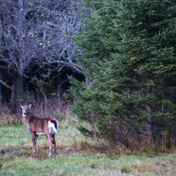 A deer can be seen in Oxbow in this November 2016 file photo.