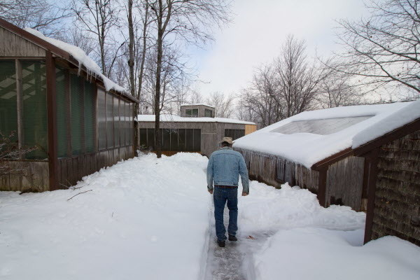 Marc Payne walks along a path between outbuildings on Jan. 4, at Avian Haven, a bird rehabilitation center in Freedom that he co-founded in 1999 with Diane Winn.