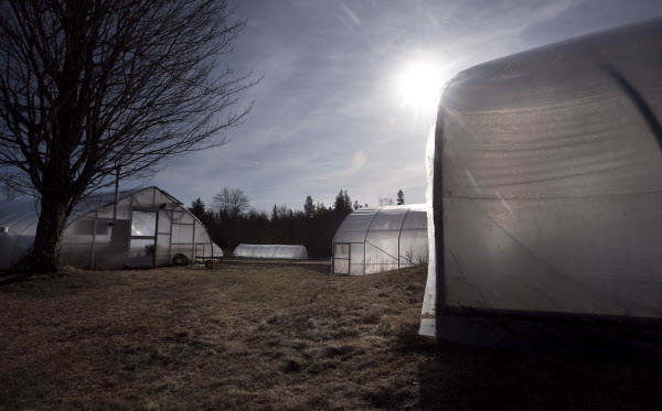 A number of high-tunnel hoop houses, the backbone of the winter vegetable production at Four Season Farm, can be seen on Tuesday at the farm in Brooksville.