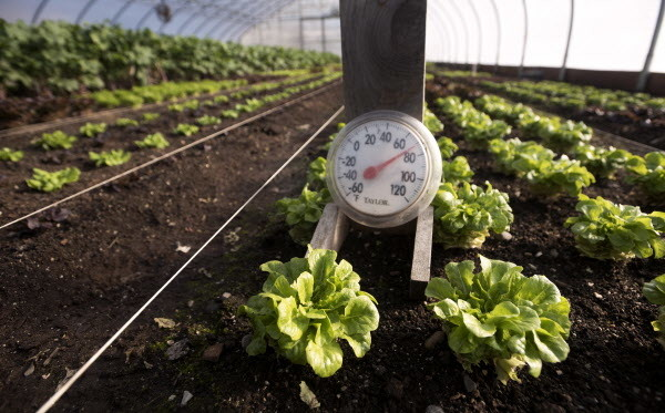 A thermometer can be seen on Tuesday in the main high-tunnel hoop house at Four Season Farm in Brooksville.
