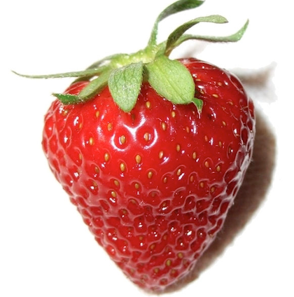 David Handley will describe the where and how of growing strawberries and raspberries at a free talk on Tuesday, January 17, at 2 p.m. in Belfast Free Library.