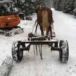 Ken Lamson of New Beat Farm in Knox keeps busy in the winter with work that includes using his draft horses to do logging jobs.