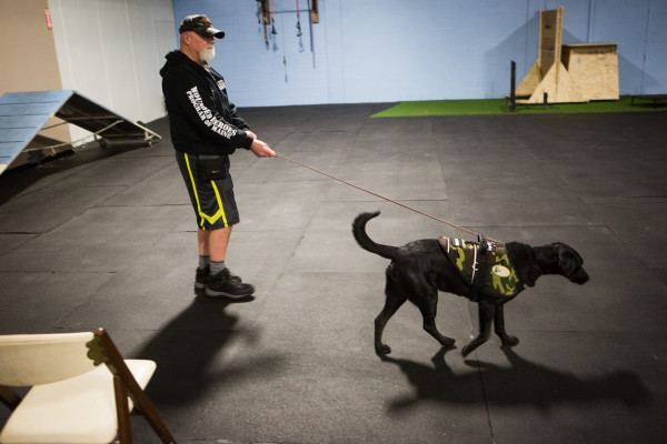 Combat veteran Bob Laidlaw walks his dog, Shadow, after a training session last week at North Edge K-9 in Portland. Laidlaw, who suffers from post-traumatic stress disorder, was matched up with Shadow for a 16-week therapy dog training course.
