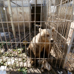 A bear is seen in the cage of Nour Park at Mosul's zoo, Iraq, Feb. 2, 2017.