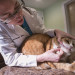 Dr. Amanda Bisol, co-owner of The Animal Medical Clinic in Skowhegan, examines Gretchen Rinaldi's cat Tucker during his yearly checkup Wednesday in Skowhegan.