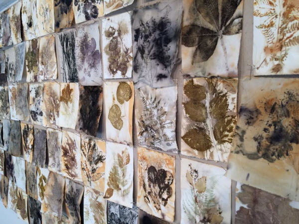 During her residency at Maine Farmland Trust's Joseph A. Fiore Art Center, artist Susan Smith created numerous pieces of artwork including these eco-prints, made from steaming plant material onto fabric.