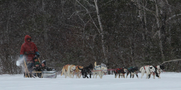 A dog sled team and musher give rides to attendees at the Winter Fun Day held at Hirundo Wildlife Refuge in Old Town on Saturday, Feb. 11.