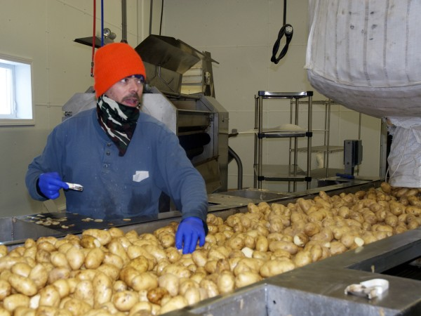 Christopher St. Peter grades and assures quality control of a run of russet potatoes destined to become cooked, frozen potato wedges at Northern Girl.
