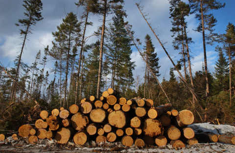 """In a promotional video, Stored Solar said it hopes to """"[make] use of the whole tree, tapping into the greater value of diversified biomass products."""" It plans to sell its waste heat and use charred wood byproduct to fuel biomass electricity generators."""
