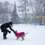 Catherine Allen plays in the snow with her dog, Manuka, at Little City Park in Bangor, Feb. 9, 2017.