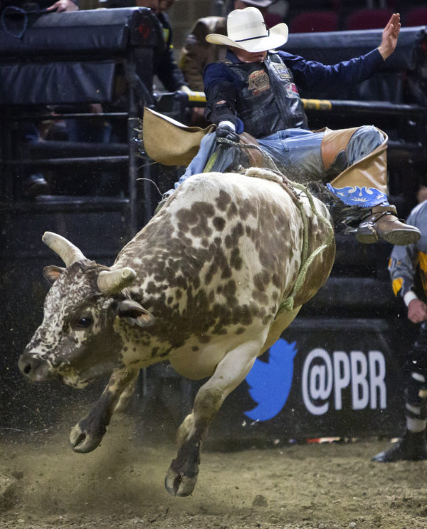 Cody Heffernan rides Squeegee during the Professional Bull Riders Velocity Tour &quotBangor Buck Off,&quot at Cross Insurance Center in Bangor Saturday.