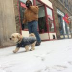 Max runs around downtown Bangor with owner Joe Grzybowski just as the snow starts to fall on Tuesday.