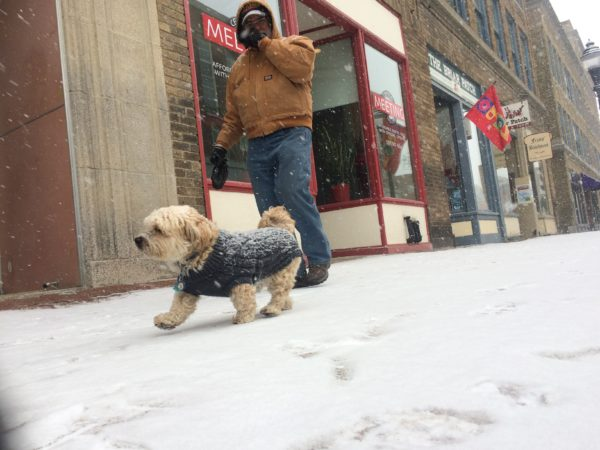 Max runs around downtown Bangor with owner Joe Grzybowski on Tuesday just as the snow starts to fall.