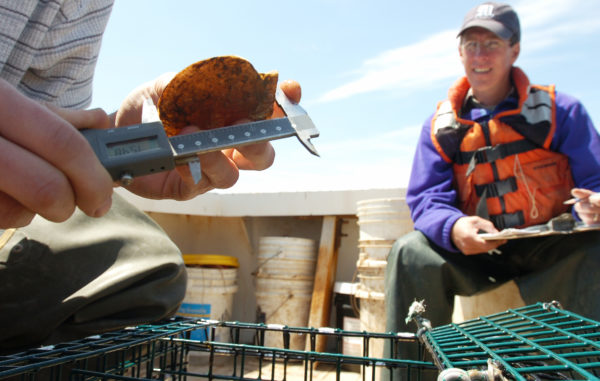A Sea Grant staffer assists with a scallop aquaculture research project at Downeast Institute in this 2007 file photo. Under budget cuts proposed by President Trump,the $73 million Sea Grant program could be eliminated altogether.