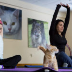 CAMDEN, Maine -- 03/22/2017 -- Clara Connolly (left), 8, and Jala Tooley stretch to the sky while Mango watches during cat yoga at P.A.W.S. Animal Adoption Center in Camden Wednesday. The third Wednesday of every month, Coastal Maine Yoga provides free yoga classes with adoptable cats at the center. Ashley L. Conti | BDN