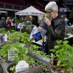 Edie Jordan smalls a container of basil at the Through the Garden Gate booth during the 2017 BDN Garden Show at the Cross Insurance Center in Bangor Friday.