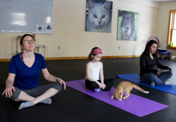 Casey McGraw (from left), Clara Connolly, 8, and Jala Tooley relax during cat yoga at P.A.W.S. Animal Adoption Center in Camden as Mango enjoys the yoga mat Wednesday. The third Wednesday of every month, Coastal Maine Yoga provides free yoga classes with adoptable cats at the center.