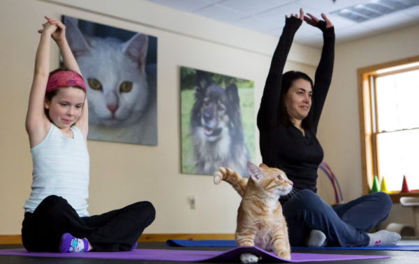 Clara Connolly (left), 8, and Jala Tooley stretch to the sky while Mango watches during cat yoga at P.A.W.S. Animal Adoption Center in Camden Wednesday. The third Wednesday of every month, Coastal Maine Yoga provides free yoga classes with adoptable cats at the center.