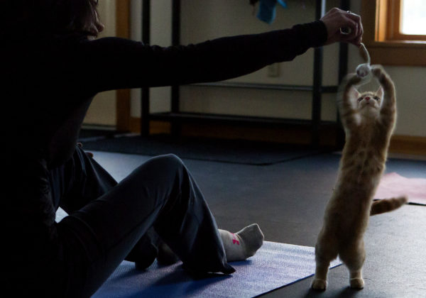 Jala Tooley plays with Mango during cat yoga at P.A.W.S. Animal Adoption Center in Camden. The third Wednesday of every month, Coastal Maine Yoga provides free yoga classes with adoptable cats at the center.