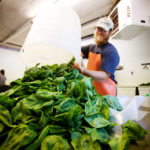 Andy Wingard of Six River Farm in Bowdoinham dumps spinach out of a spinner after washing it. Six River Farm grows a mix of vegetables and herbs on15 acres of rich land around Merrymeeting Bay.