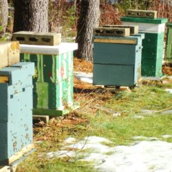 Bees flying on a warm winter day