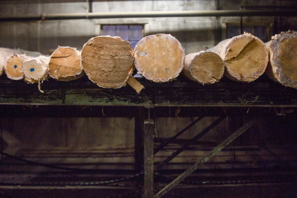 Logs await cutting at Robbins Lumber in Searsmont.