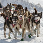 Can-Am Crown WJC 100 musher Ward Wallin's sled dogs make their way to the Allagash checkpoint during the race, March 5, 2016.