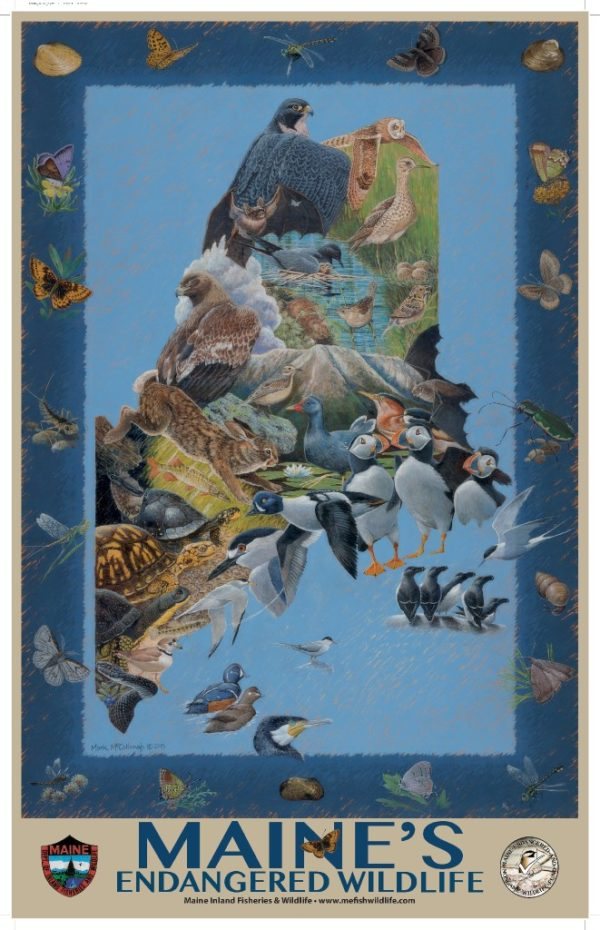 Maine's 2016 endangered and threatened species poster, painted by Mark McCollough.