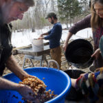 BELFAST, Maine -- 03/30/2017 -- Susan Cutting (right) adds water to a bucket of acorns so Molly Katz-Christy and Jim Merkel can agitate the acorns to remove the skins while Steve Byers washes out an agitated bucket of acorn at their home in Belfast Thursday. The group expects to make around 20 pounds of acorn flour when they are done. Ashley L. Conti | BDN