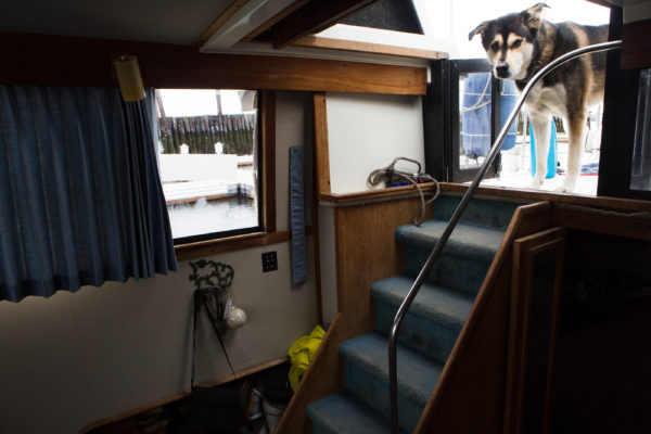 Cirroc, a husky, looks down into the cabin of the boat he lives on in Portland. His owners, Nate Taylor and Krystin Noyes, lived on the boat all winter.