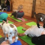 A farm in New Hampshire is offering a different athletic experience: yoga with goats.