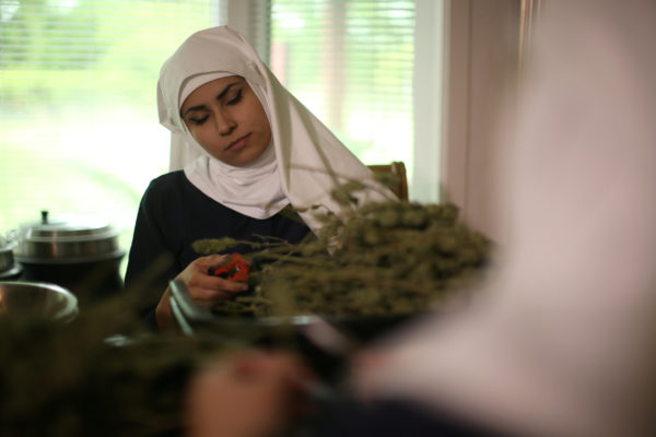 California &quotweed nun&quot India Delgado, who goes by the name Sister Eevee, trims hemp in the kitchen at Sisters of the Valley near Merced, California, U.S., April 18, 2017.
