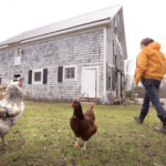 """Cluck"" goes the holiday shutter"