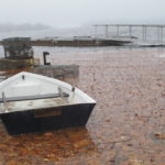 A rowboat floats in the parking lot of the town pier in Blue Hill