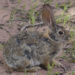 Desert animals and plants, highlights of my southwest vacation