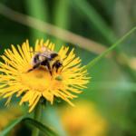 Fighting backyard dandelions and War on Terror