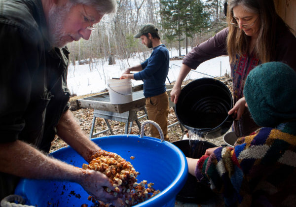 Susan Cutting (right) adds water to a bucket of acorns so Molly Katz-Christy and Jim Merkel can agitate the acorns to remove the skins while Steve Byers washes out an agitated bucket of acorn at their home in Belfast on Thursday. The group expects to make around 20 pounds of acorn flour when they are done.