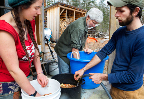 Molly Katz-Christy (from left), Jim Merkel, and Steve Byers agitate buckets of acorns in water to remove the skins at their home in Belfast on Thursday. The group expects to make around 20 pounds of acorn flour when they are done.