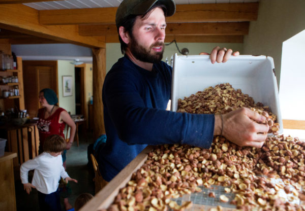 Steve Byers transfers dried acorns to a bin to make acorn flour in Belfast on Thursday. The group expects to make around 20 pounds of acorn flour when they are done.